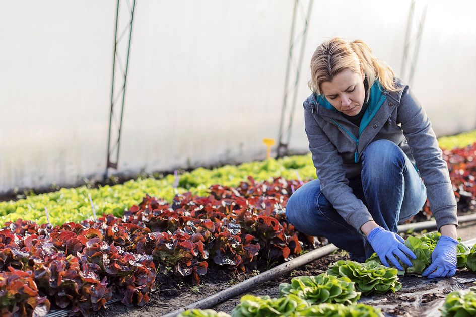 Woman kneels next to plants wearing blue sweatshirt with hair tied back